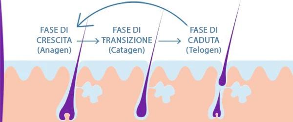 ciclo di vita capelli